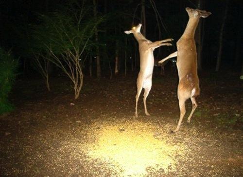 Deer-Dancing